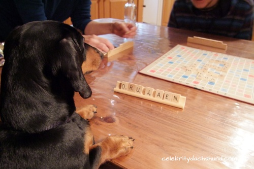 wiener-dog-playing-scrabble
