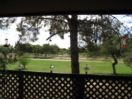 I love the view from my patio.